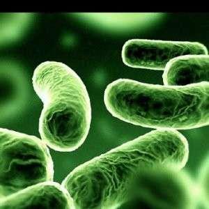 Atteintes infectieuses