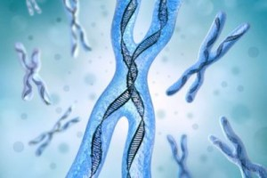 Cartographie génétique de la pathologie osseuse
