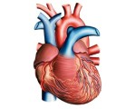 Causes cardiaques des embolies