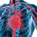 Physiologie de la circulation artérielle