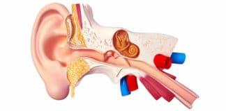 Anatomie fonctionnelle des voies auditives