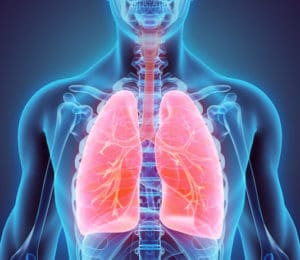 Anatomie de l'appareil respiratoire