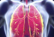 Anatomie du poumon humain