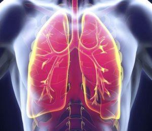 Menschliche Lunge Anatomie