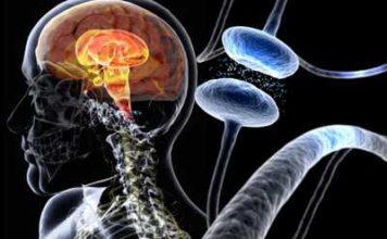 Aspects neurochimiques de la maladie de Parkinson