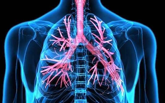 Cellules de la réponse immunitaire dans le poumon. Interactions entre les cellules accessoires et les lymphocytes T