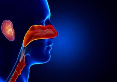 Expertise médicolégale. Réparation du préjudice corporel en oto-rhino-laryngologie (Suite)