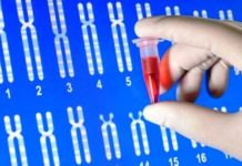 Biologie et génétique moléculaires (Suite)