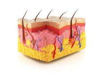 Histologie de la peau normale et lésions histopathologiques élémentaires (Suite)