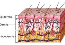 Hypodermites aiguës et chroniques
