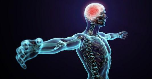 Influence des affections du système nerveux central sur le système cardiovasculaire