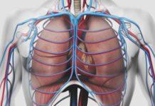 Interactions coeur-poumon en pathologie cardiaque et respiratoire