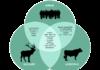 Lutte contre les zoonoses (Rôle des Différents Intervenants dans la lutte contre les Zoonoses)