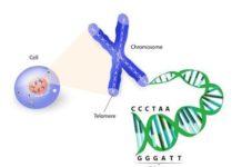 Indications de l'analyse des chromosomes et de l'ADN pour le diagnostic des maladies génétiques