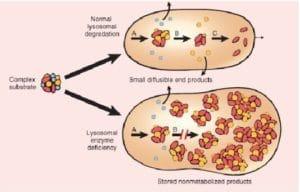 Manifestations ostéoarticulaires des maladies de surcharge (IV)