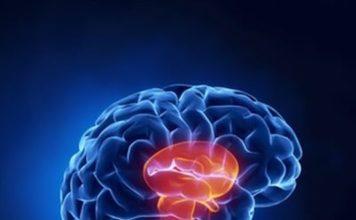 Génétique des maladies du système nerveux périphérique (Suite)