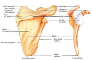 Malformations de la ceinture scapulaire chez l'enfant et l'adolescent
