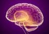 Manifestations neurologiques des infections