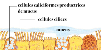 Physiologie de la muqueuse respiratoire nasale et troubles fonctionnels