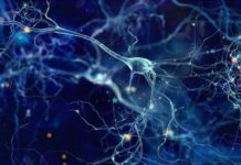 Neurobiologie cellulaire et moléculaire (Suite)