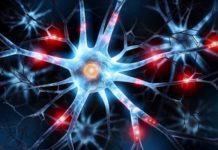 Neurobiologie cellulaire et moléculaire
