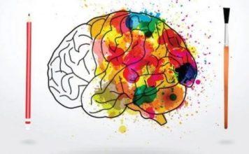 Neuroplasticité (Suite)