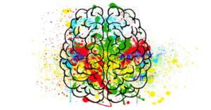 Neuroplasticité