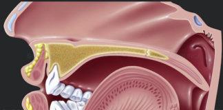 Physiologie de la phonation (Suite)
