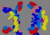 Pustulose sous-cornée et pemphigus à immunoglobuline A