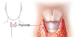 Structure et physiologie thyroïdiennes