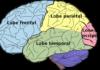 Syndromes neuropsychologiques progressifs par atrophie corticale focale
