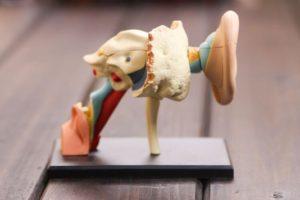 Syndromes vestibulaires (Suite)