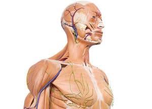 Tumeurs des tissus mous des membres