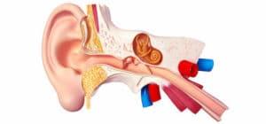 Tuberculose de l'oreille moyenne